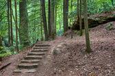 在神秘的树林里老石台阶 — 图库照片