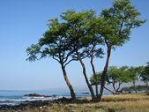 Ocean bay coastline with rocks and trees. — Stock Photo