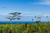 緑の海岸からは青い海の穏やかな眺め. — ストック写真
