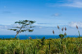 Serene view of blue ocean from green coast. — Stock Photo