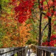 Wooden stairs in Autumn forest. — Stock Photo