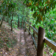Fenced path in the woods - Stockfoto