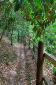 Fenced path in the woods — 图库照片