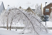 Trees bent over from the weight of the ice. — Stock Photo