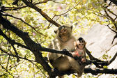 Mom monkey with its baby in her arms — Stock Photo