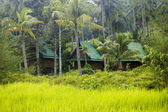 Bungalows hidden in tropical vegetation — Stock Photo