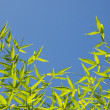 Green bamboo leaves over blue sky — Stock Photo #7843790