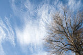 Tree on blue sky with small clouds — Stock Photo