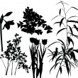 Plants set I — Stock Vector