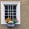 Fenster mit Blumen — Stock Photo
