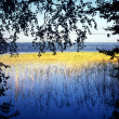 Lake, gold grass — Stock Photo #7596077