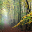 Misty forest path in fall — Stock Photo #7519803