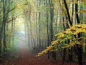 Misty forest path in the fall — Stock Photo