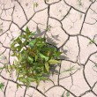Small green plant in dry, cracked earth — Stock Photo