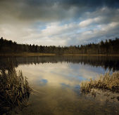 Wild lake — Stock Photo