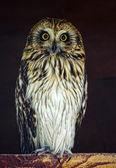 Owl night owl nighthawk park — Stock Photo