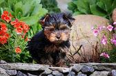 庭で犬 — ストック写真