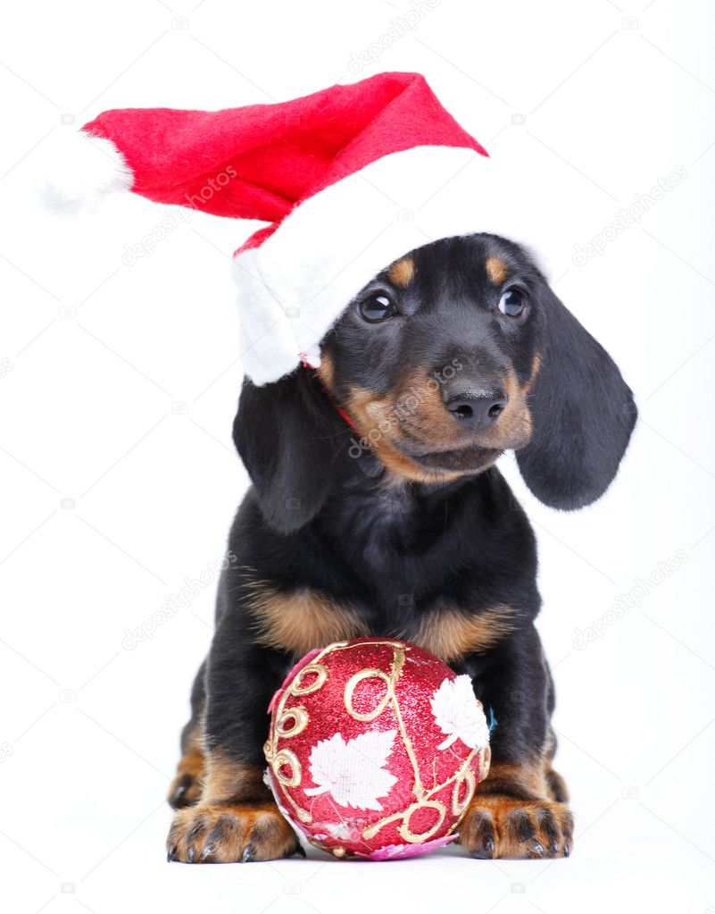 Happy new year christmaspuppyball hat studio — Stock Photo #7797503