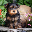 Stock Photo: Dog in garden