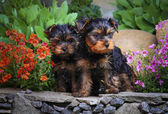 Dogs in the garden — Stock fotografie