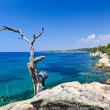 Tree trunk, rocky coastline and turquoise clear sea - Stock Photo