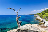 Tree trunk, rocky coastline and turquoise clear sea — Stock Photo
