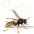 Paper Wasp with Abstract Background — Stock Photo