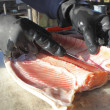 Filleting Salmon — Stock Photo