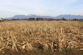 A Dormant Corn Field in the Fraser Valley — Stock Photo