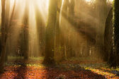Early sun in the woods — Stock Photo