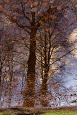 Reflection of trees — Stock Photo