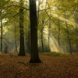 Stock Photo: Sun in woods