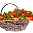Orange tulips in basket — Stock Photo #7553648