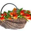 Stock Photo: Orange tulips in basket