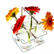 Stock Photo: Tray with springflowers