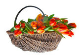 Orange tulips in basket — Stock Photo