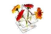 Tray with springflowers — Stock Photo