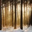 Light through trees — Stock Photo