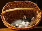 Dolorous cat — Stock Photo