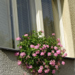 Flower in window — Stock Photo