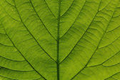 Macro detail of green leaf — Stock Photo