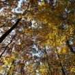 Stock Photo: Autumn fall colored forest foliage