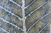 Close-up macro detail of frozen leaf — Stock Photo