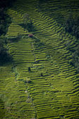 Little house inbetween rice terraces on hillside — Stock Photo