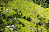 Aerial view of beautiful rice terraces on mountain slopes in sikkim — Stock Photo