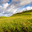 Causeway coast grassland — Stock Photo