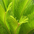 Close up of green palm tree leaves — Foto de stock #7779507