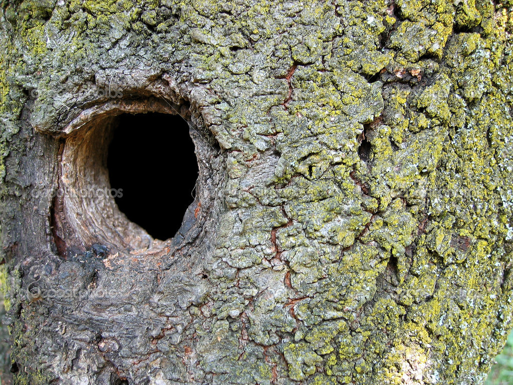 gros plan d 39 un tronc d 39 arbre avec un trou photographie krispi313 7845176. Black Bedroom Furniture Sets. Home Design Ideas