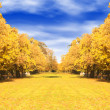 Autumn trees path — Stock fotografie