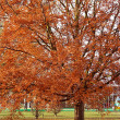 Autumn tree — Stockfoto